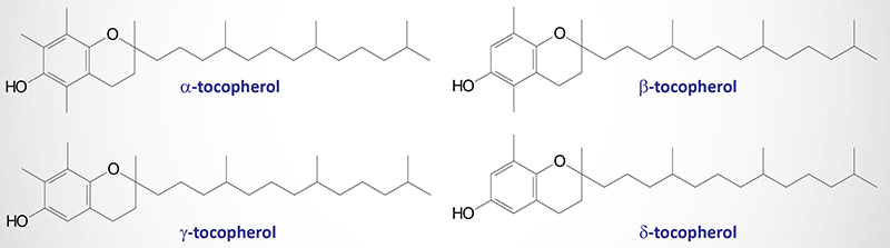 Structure of the tocopherols