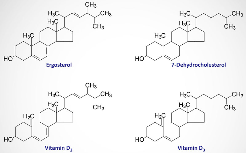 Structures of major forms of vitamin D